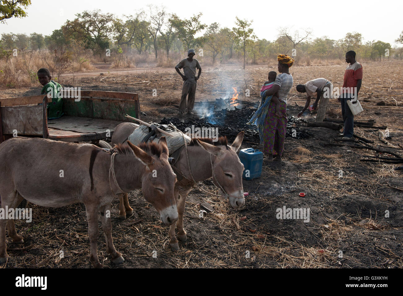 MALI, Sahel region, over production of charcoal from bush wood is a environmental impact for this dry region, charcoal - Stock Image