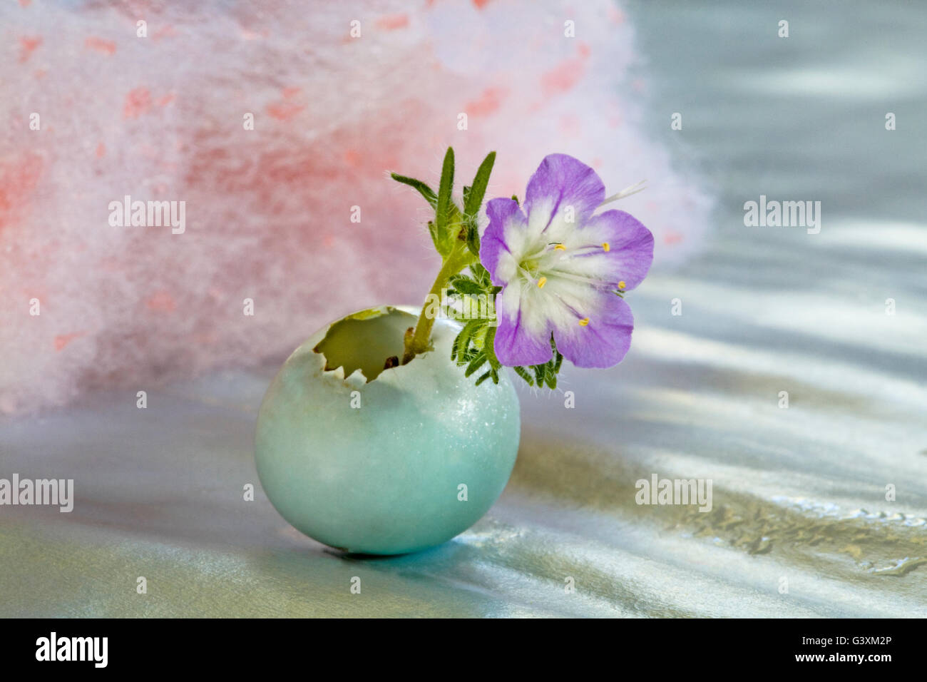 A tiny flowers grows out of a broken sparrow's egg - Stock Image
