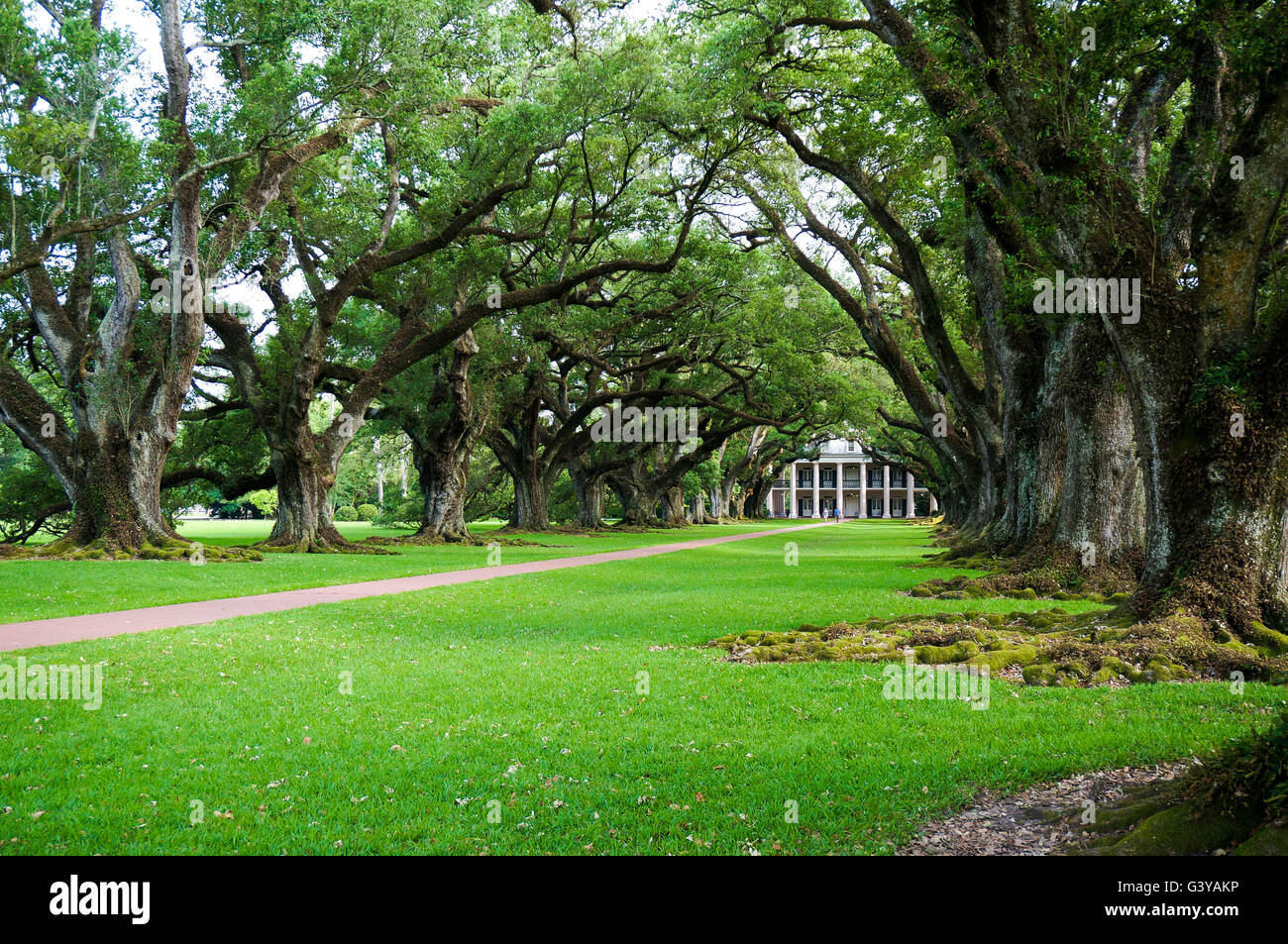 View of Oak Alley Plantation and its canopy of 300 year old live oak trees, Vacherie, Lousiana, USA. - Stock Image