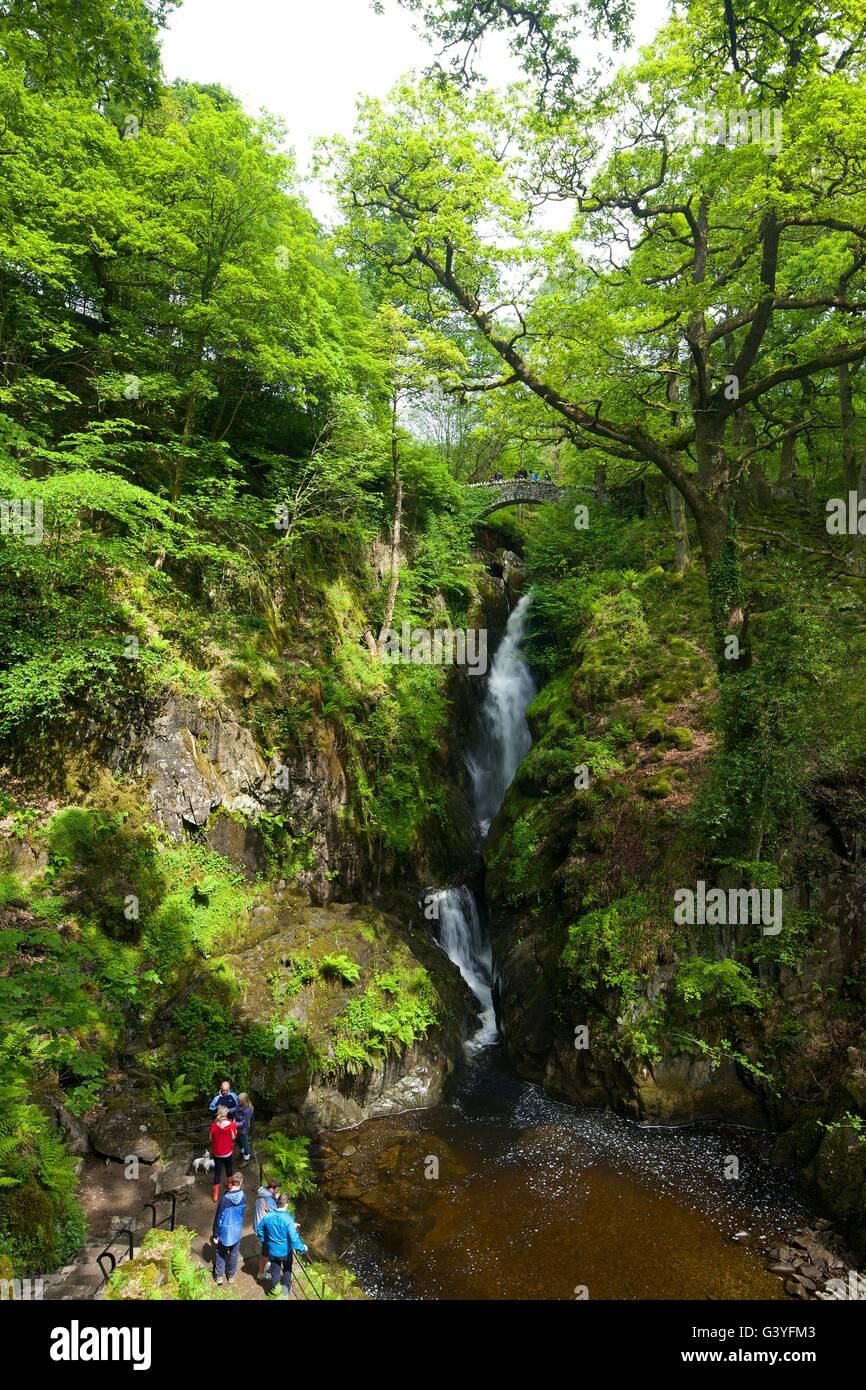 Aira Force, Ullswater, Lake District National Park, Cumbria, England, UK, GB,  Europe - Stock Image