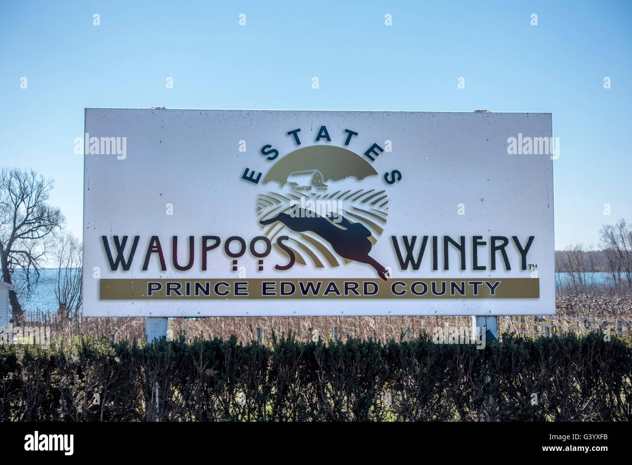 Waupoos Winery Sign A Vineyard In Prince Edward County Ontario A Popular Wine Making Area Of Ontario Canada - Stock Image