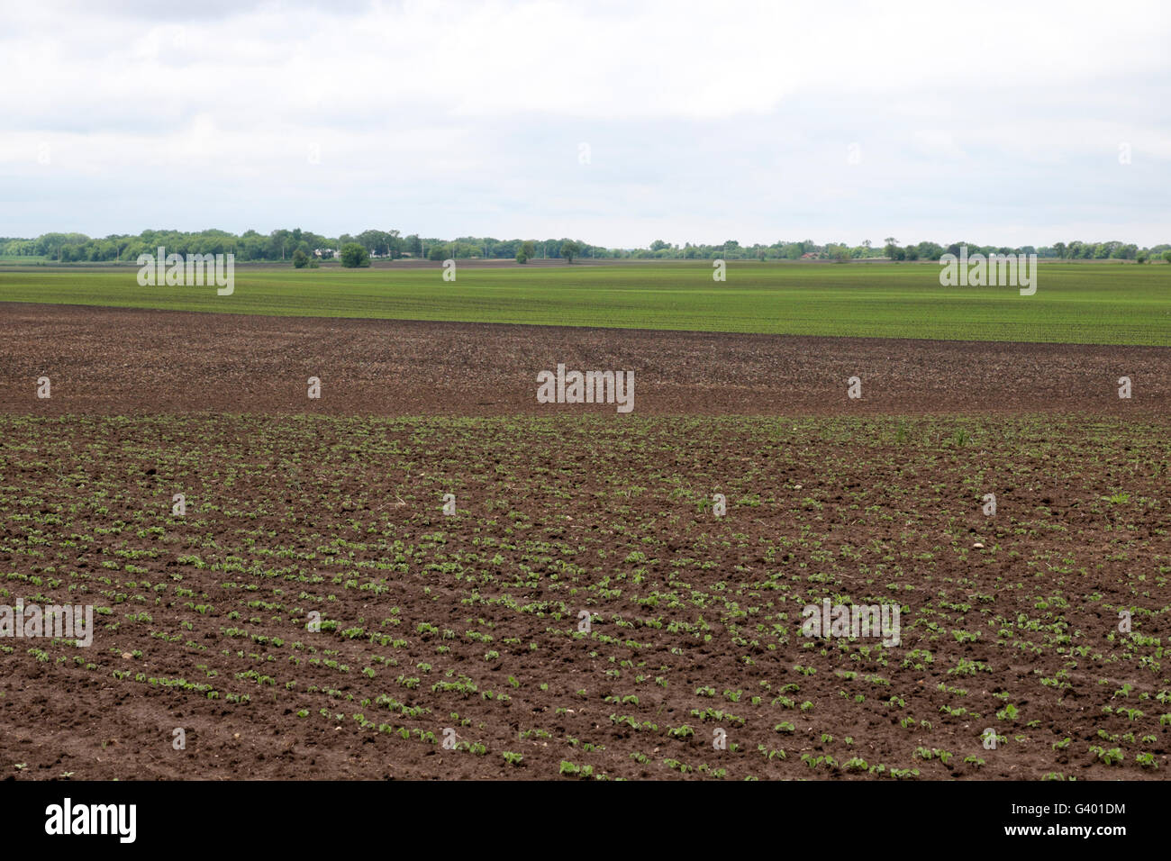 Cultivated and planted fields on a northern Illinois farm in early spring. - Stock Image