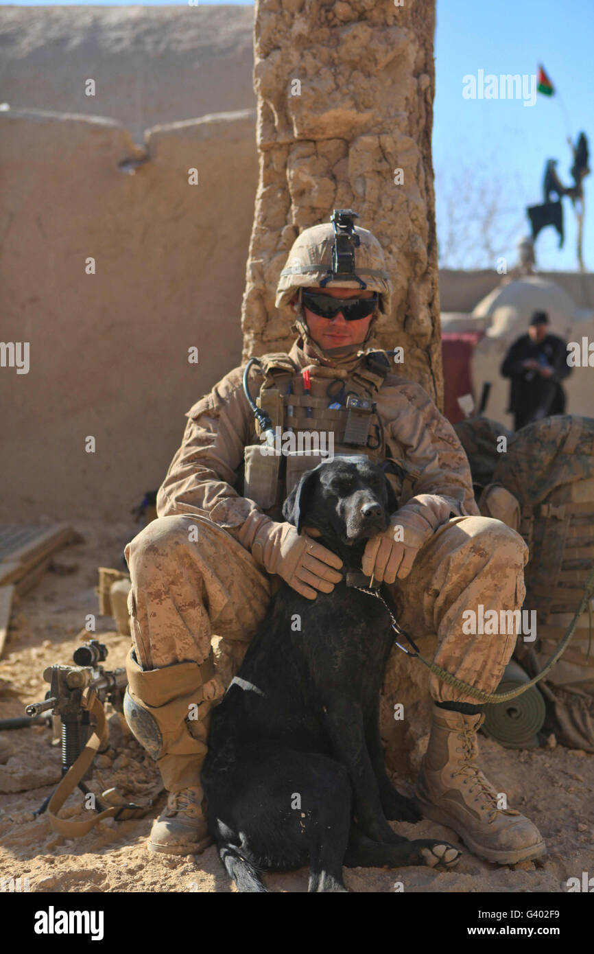 An IED detection dog keeps his dog handler company. - Stock Image
