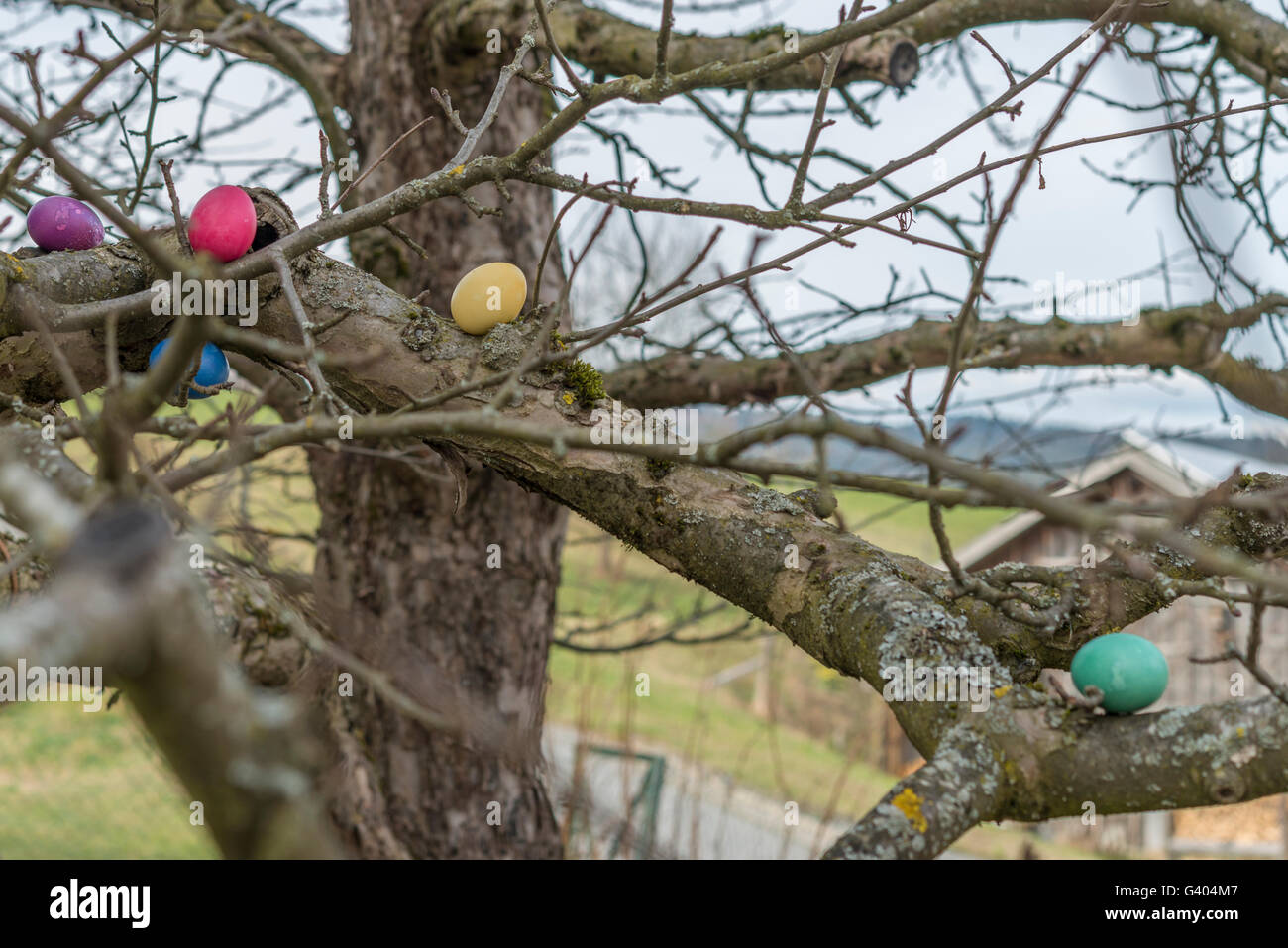 Colorful easter eggs on a tree - Stock Image