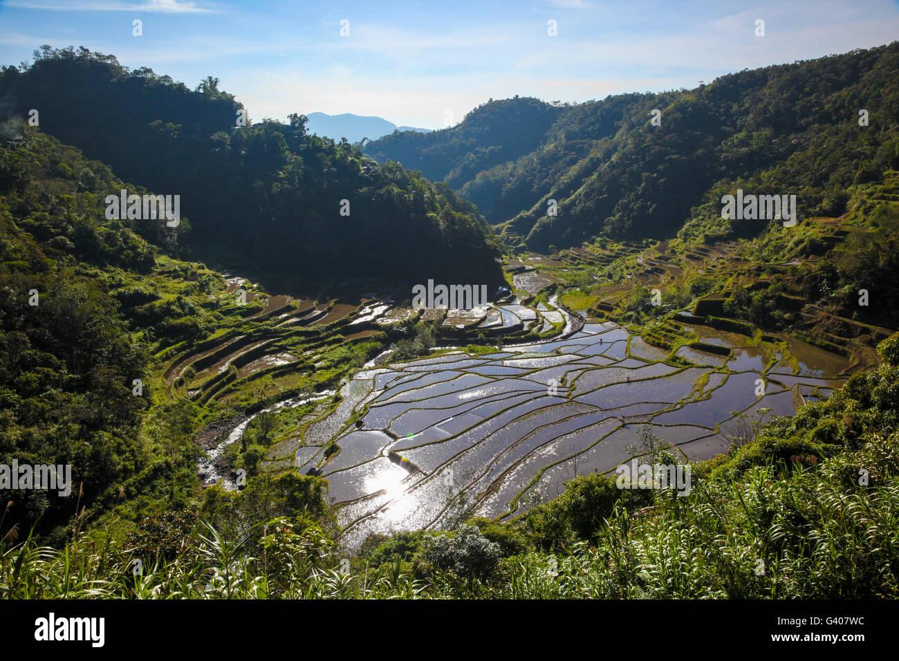 UNESCO rice terraces in Batad, Philippines - Stock Image
