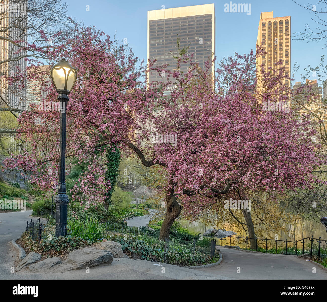 Central Park New York City With Flowering Trees In Spring Stock