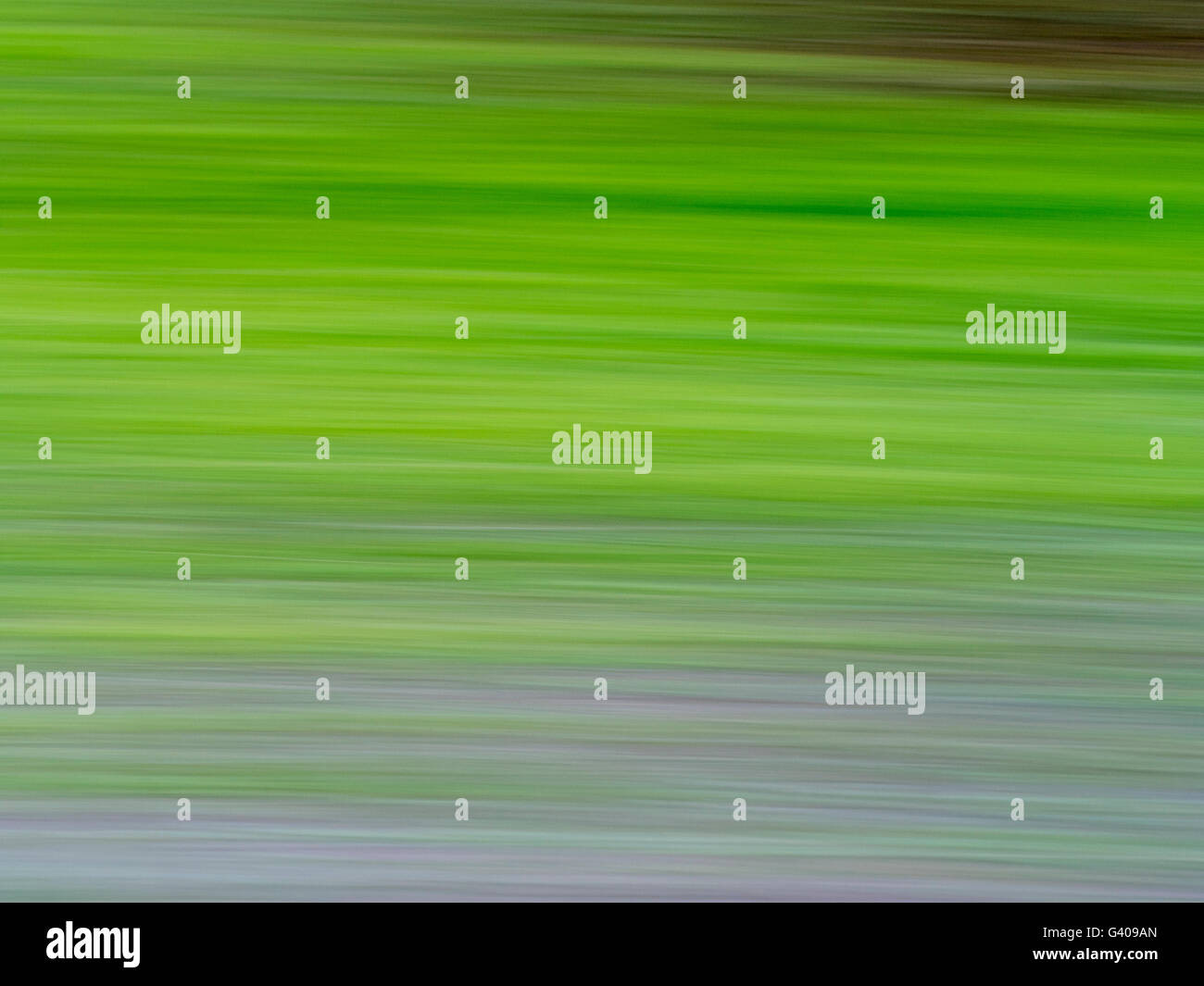 green abtract background in forest - Stock Image