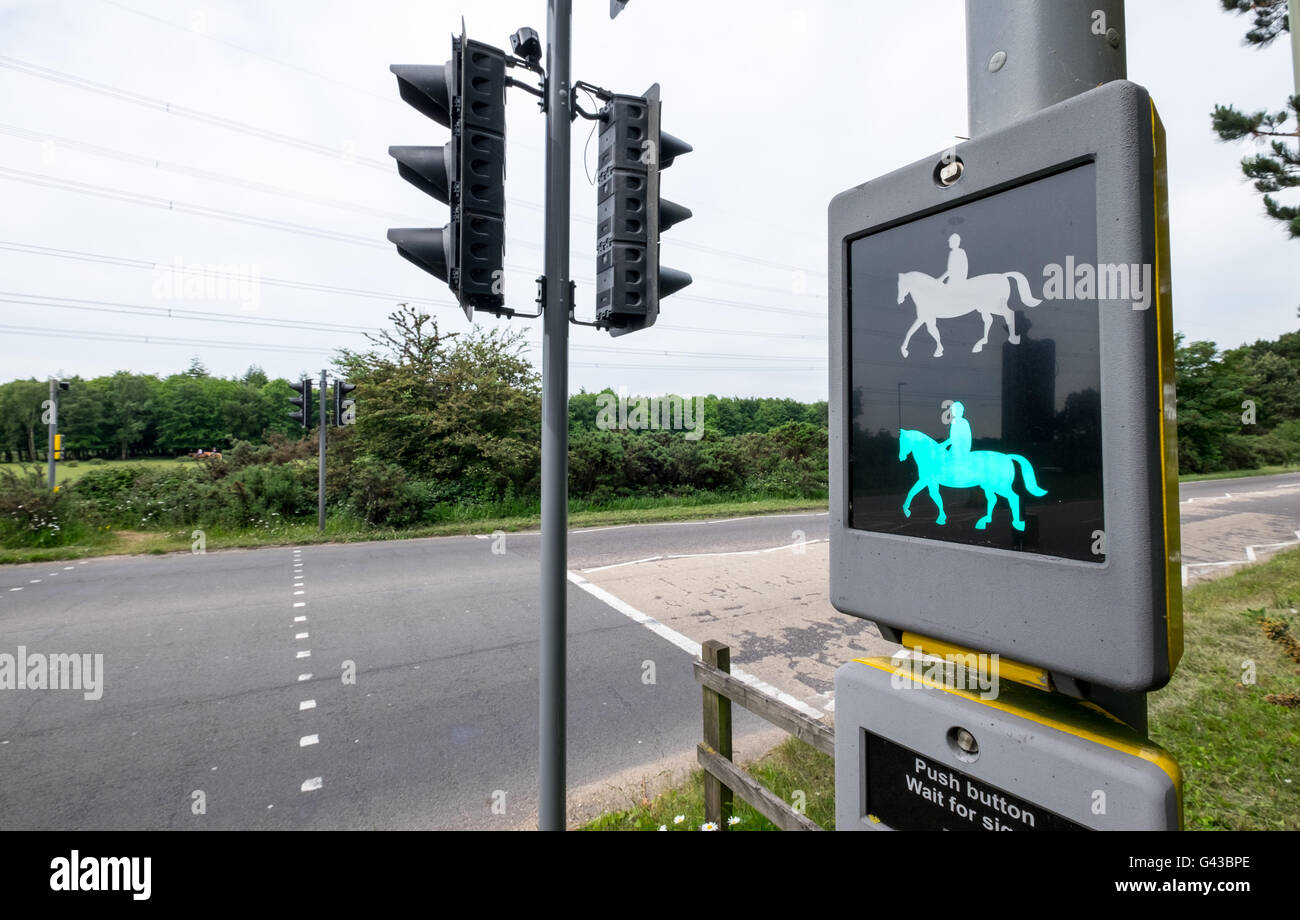 Horse rider traffic lights crossing in The New Forest National Park Hampshire, UK - Stock Image