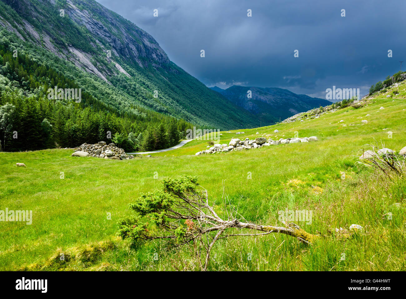 Amazing panorama of a Norwegian valley, with a fallen tree in the foreground and approaching storm in the background Stock Photo