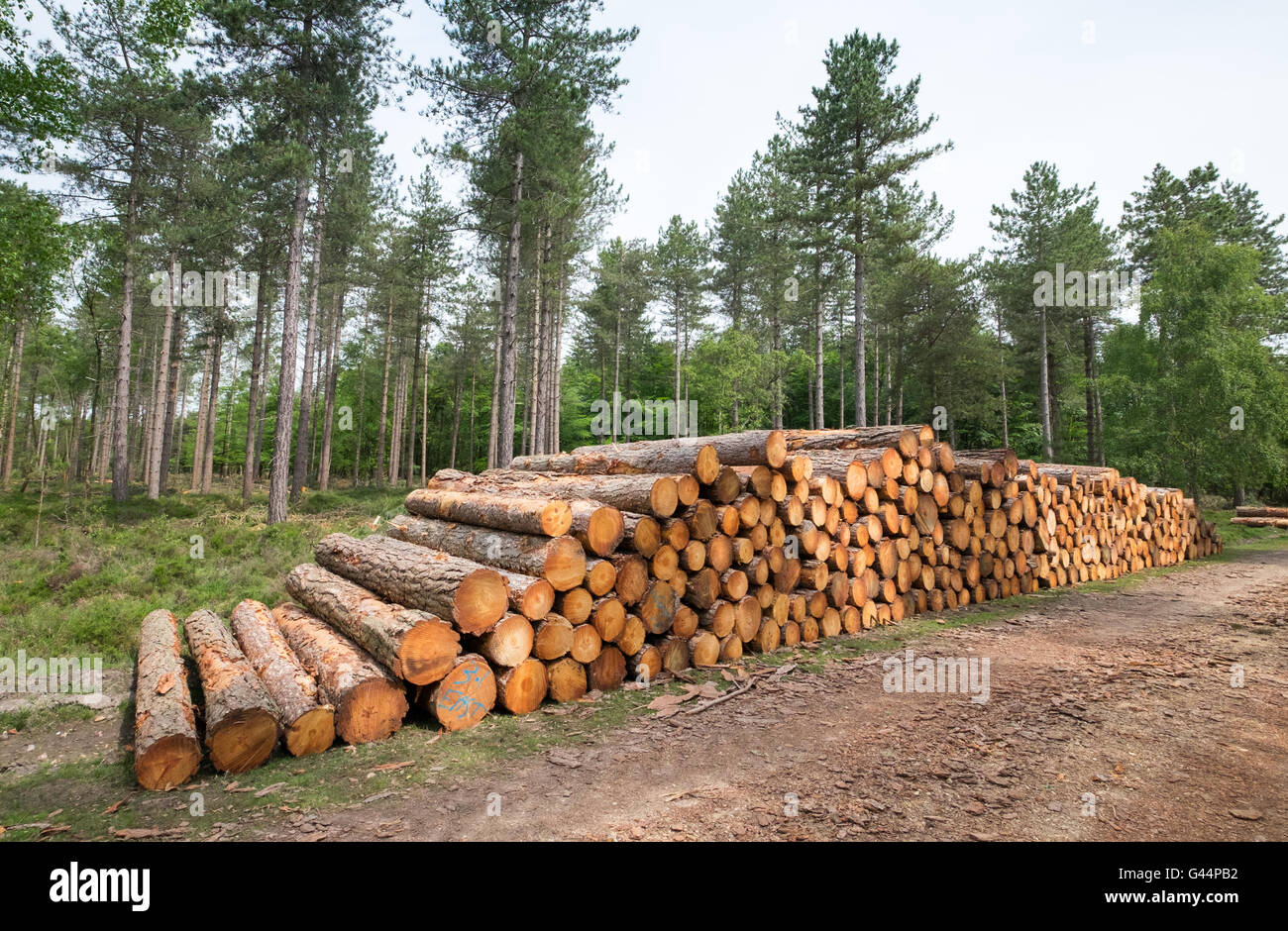 Stack of logs in The New Forest National Park - Stock Image