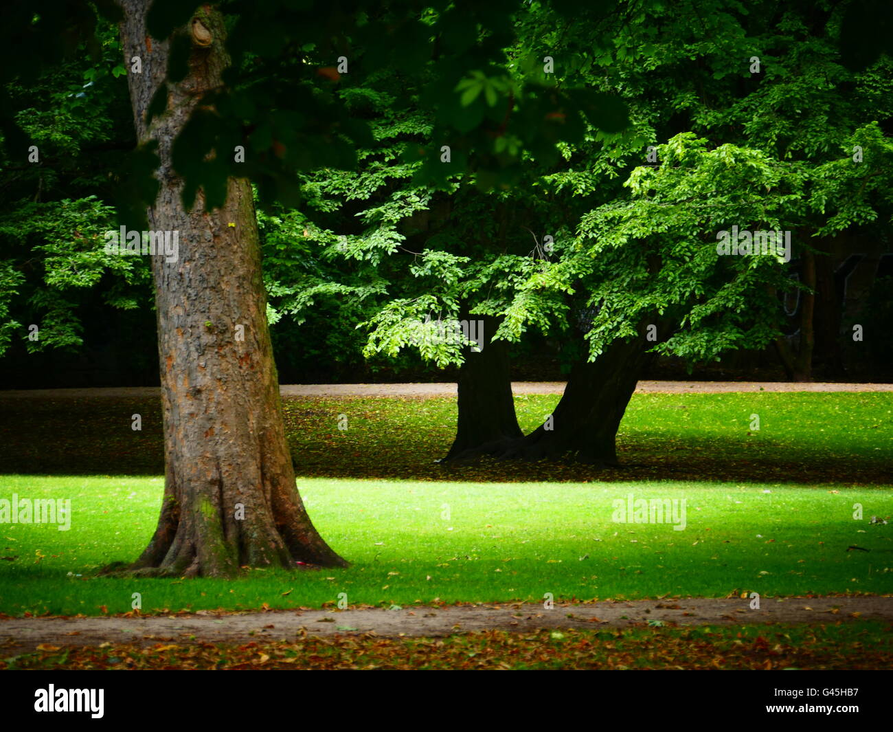 Europe Germany Cologne Koln Koeln Stadt park City Folks Park - Stock Image