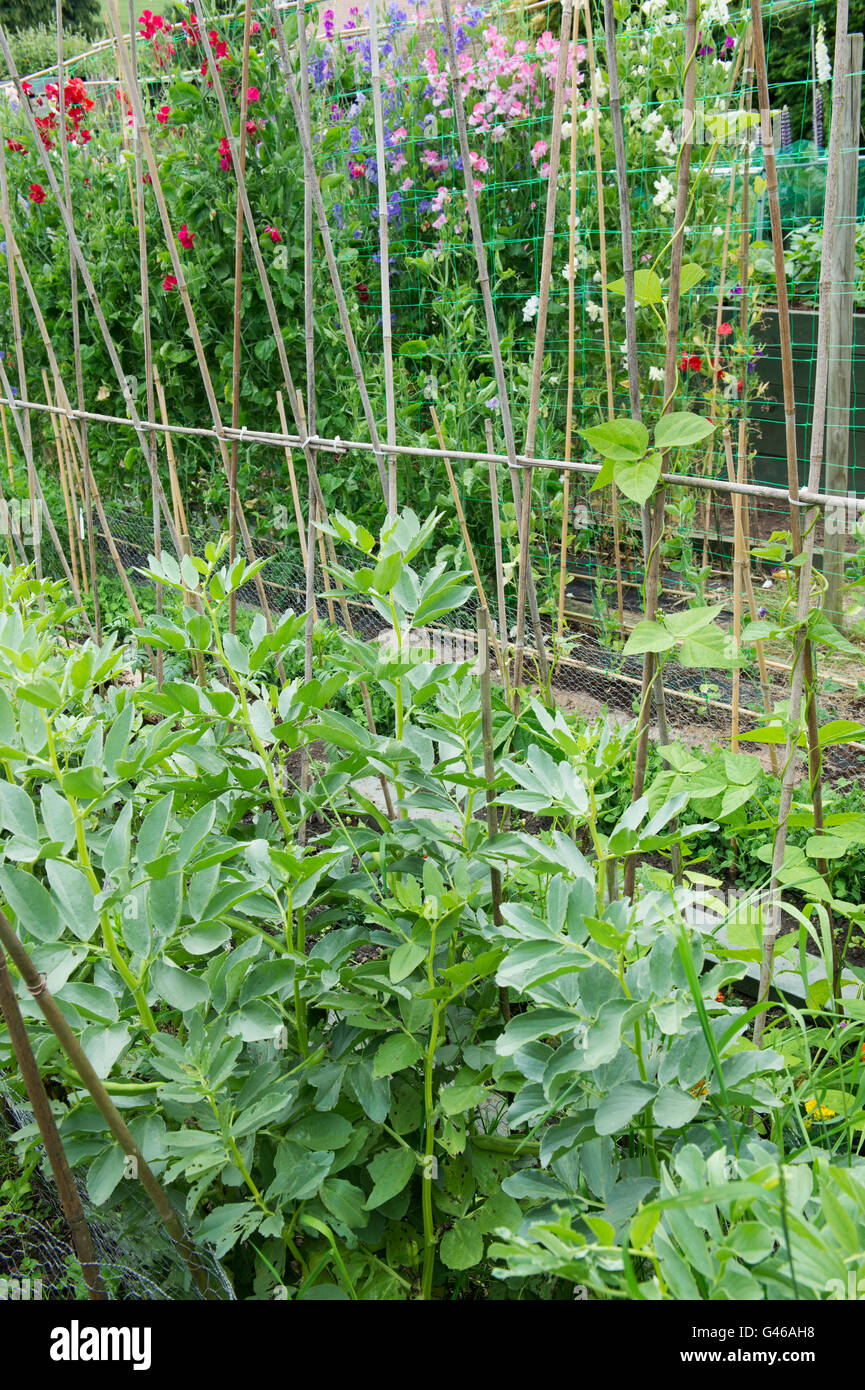 Vegetable Garden Gardens In Village Stock Photos Vegetable Garden