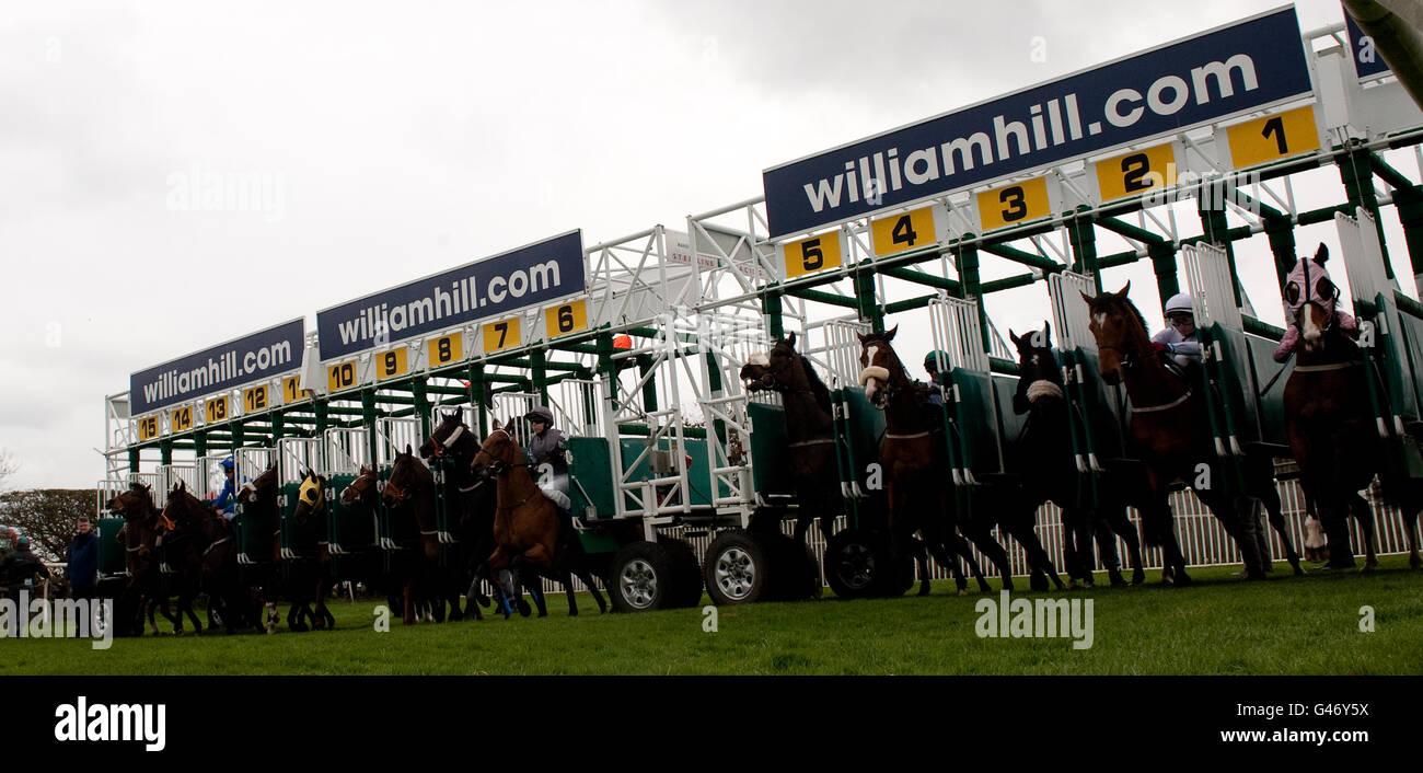 William hill apprentice betting como minar bitcoins gratis