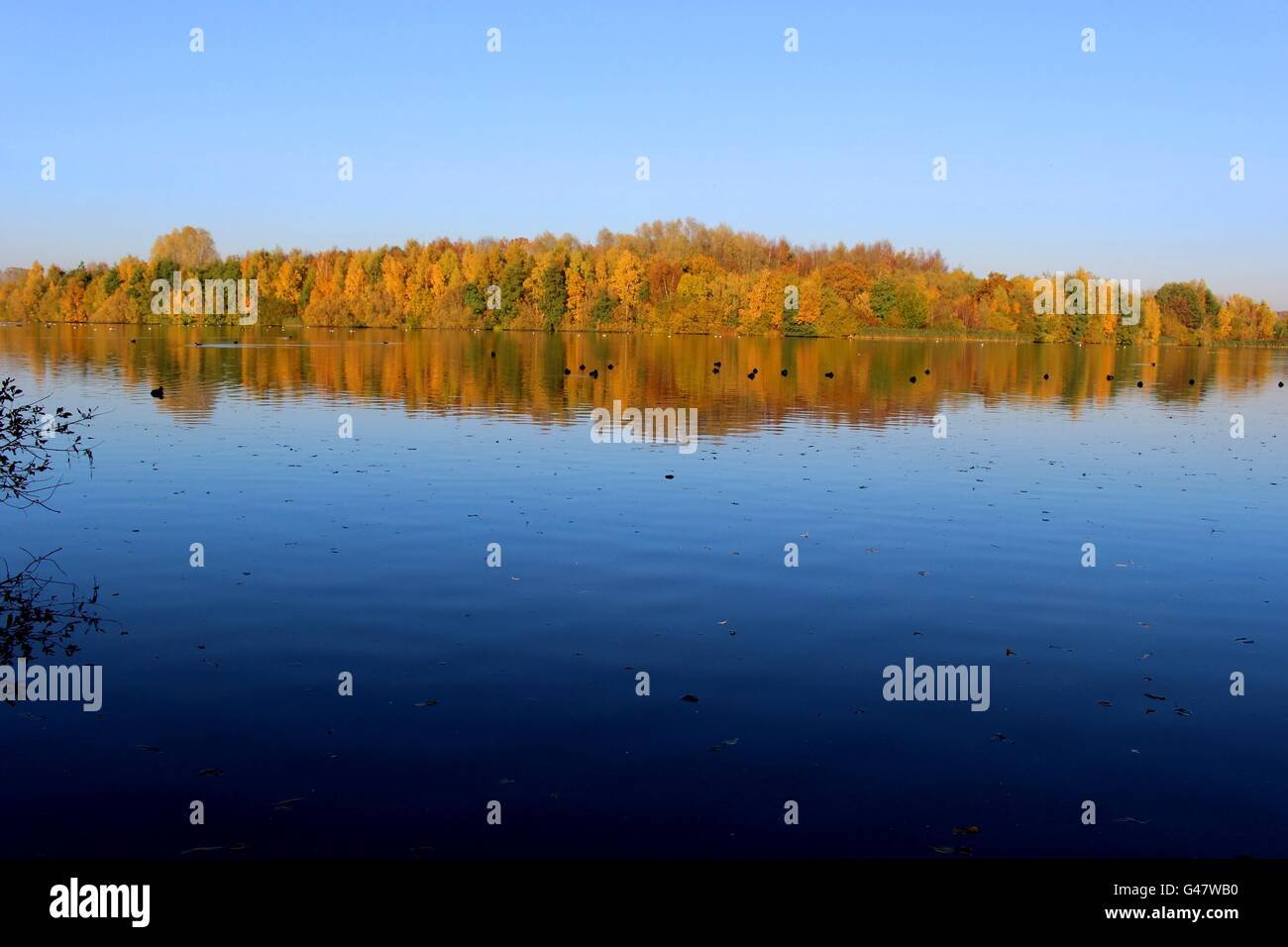 Reflections in a lake at Sandwell Valley Park. - Stock Image