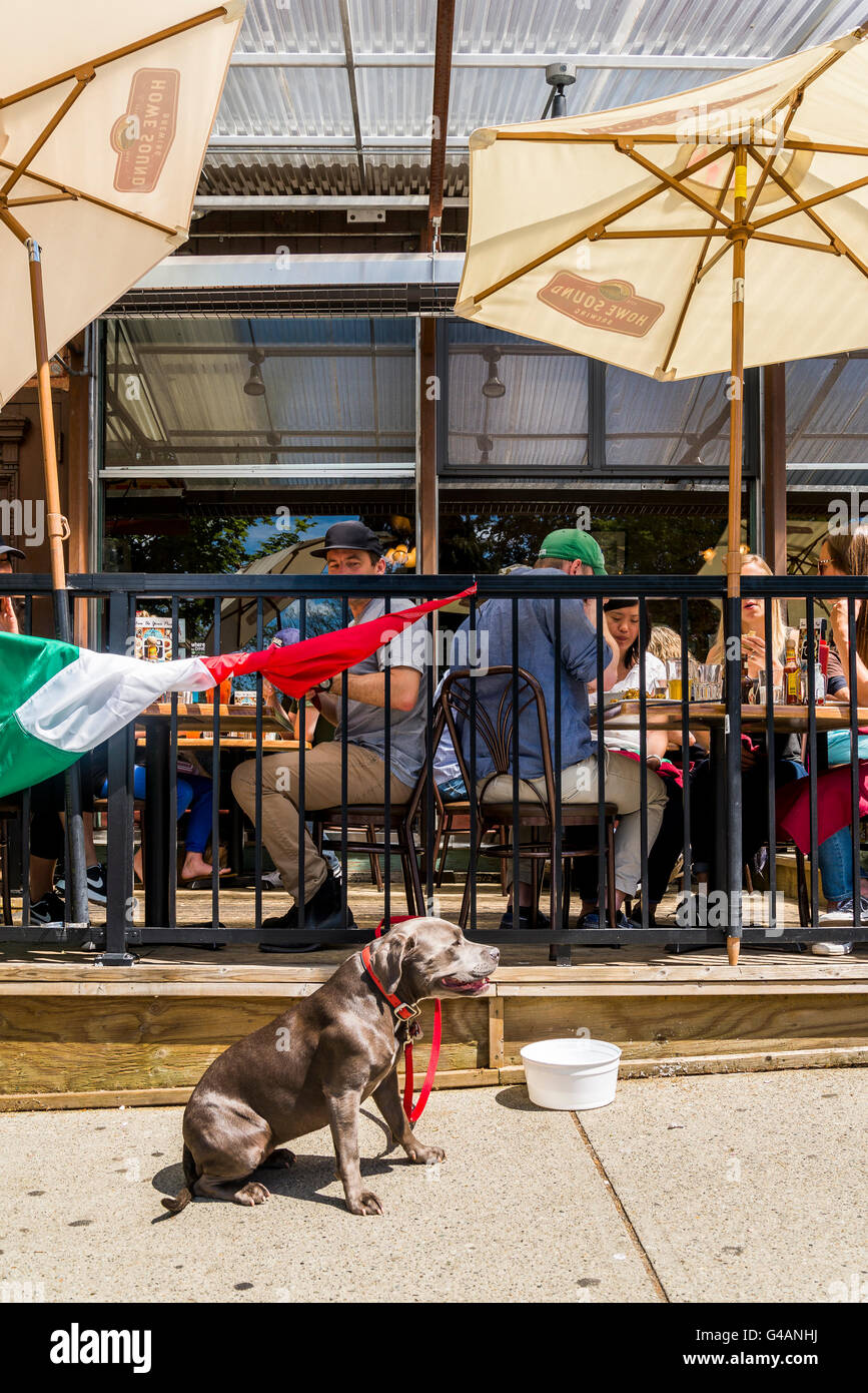 Dog tied to restaurant patio fence, Commercial Drive, Vancouver, British Columbia, Canada - Stock Image