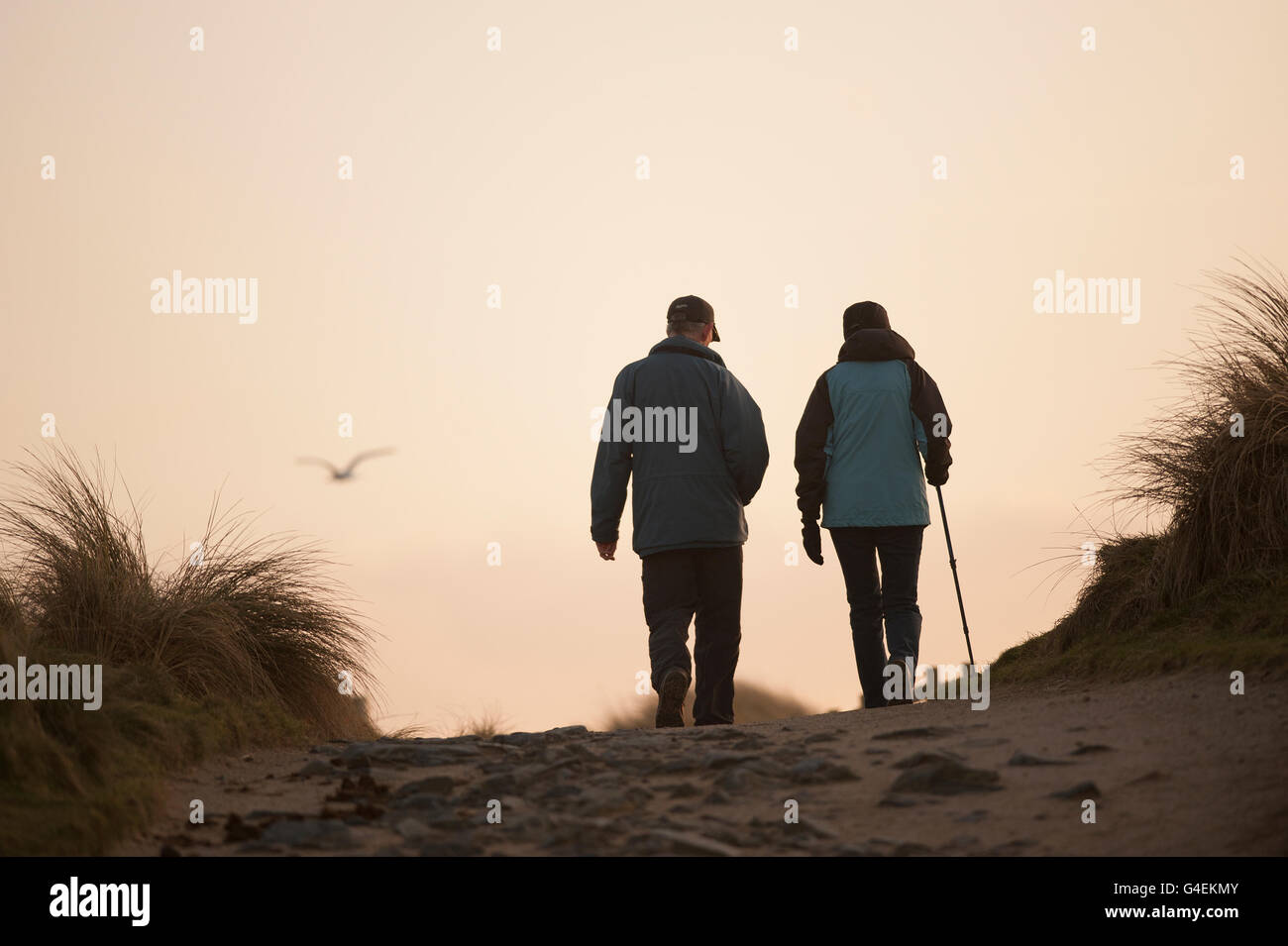 Couple Walking homeward on the coast path through the dunes at dusk with a seagull flying out of focus in the distance - Stock Image