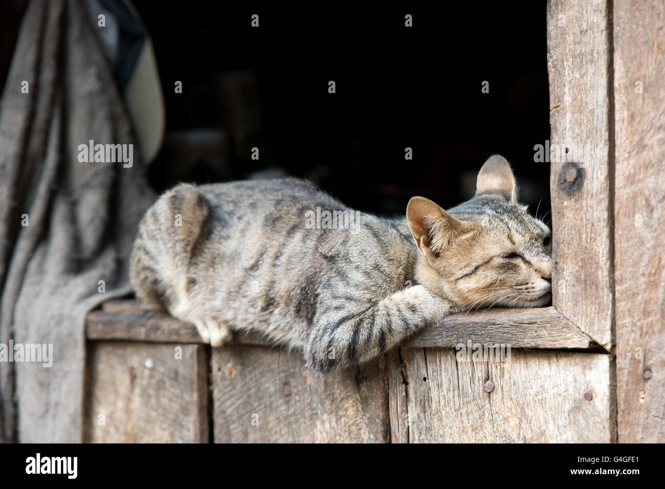 A cat snoozing on a window of a traditional Kayaw (Bwe) wood house, Heyi Ko village, Kayah State, Myanmar - Stock Image
