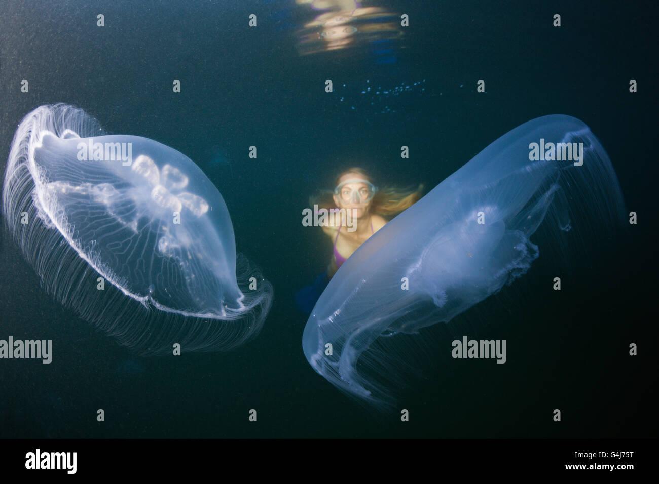 Moon Jellyfish and snorkeler, Aurelia aurita, Raja Ampat, West Papua, Indonesia - Stock Image