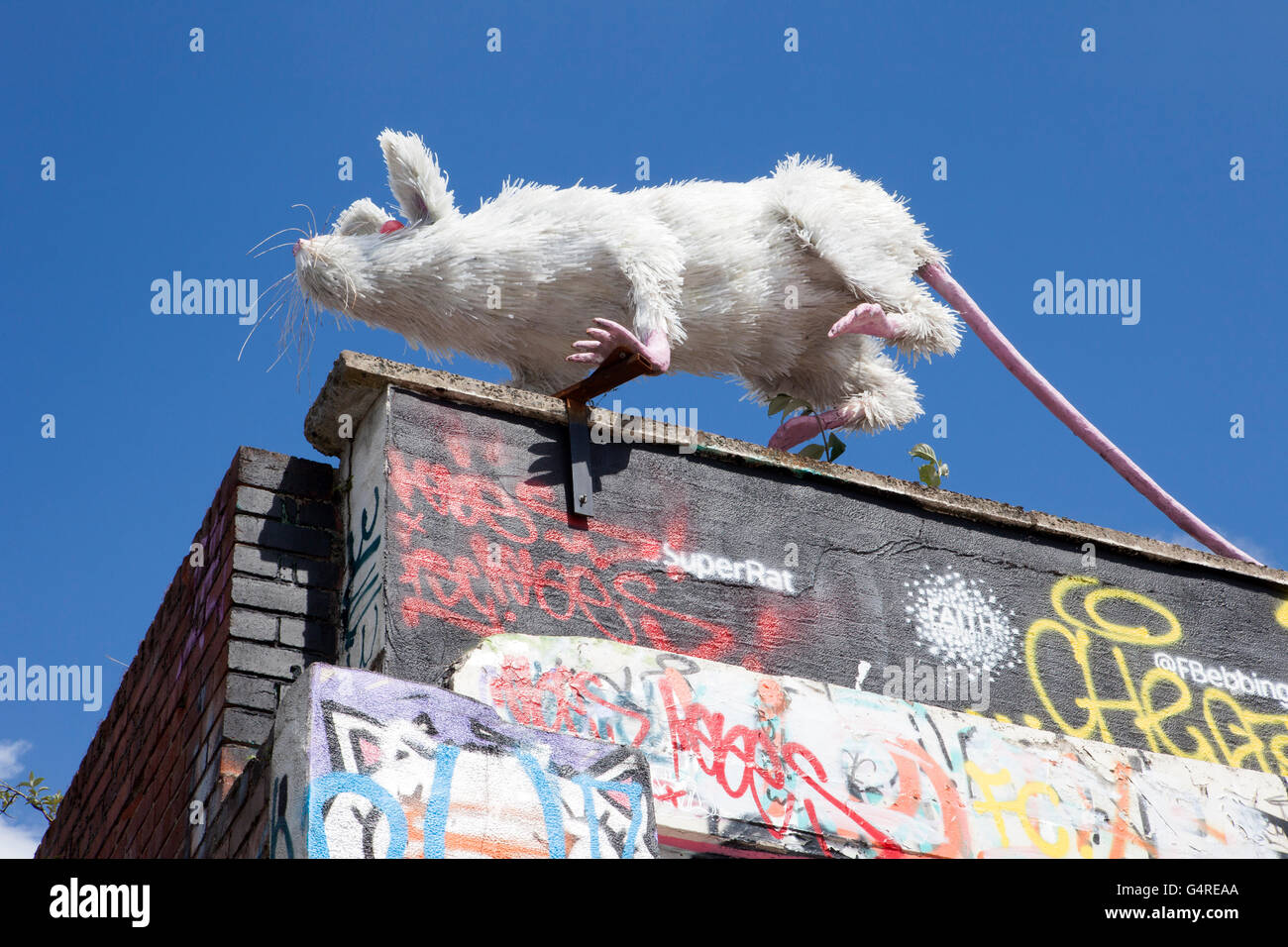 The 'Ratpack' art project on Liverpool's Gin Lane.  The rat sculpture is made from recycled plastic - Stock Image