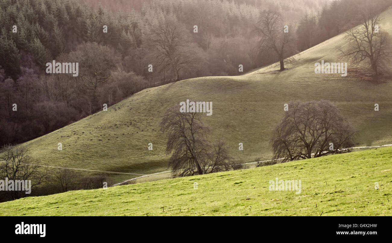 Radnorshire, Powys, Wales, UK. Countryside view among the hills of the Welsh borders near Knighton - Stock Image
