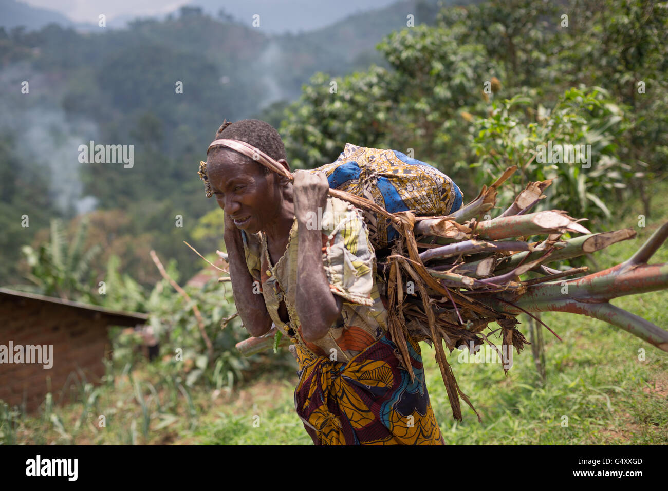 A woman carries firewood down a rural village lane in the foothills of the Rwenzori Mountains on the DRC / Uganda - Stock Image