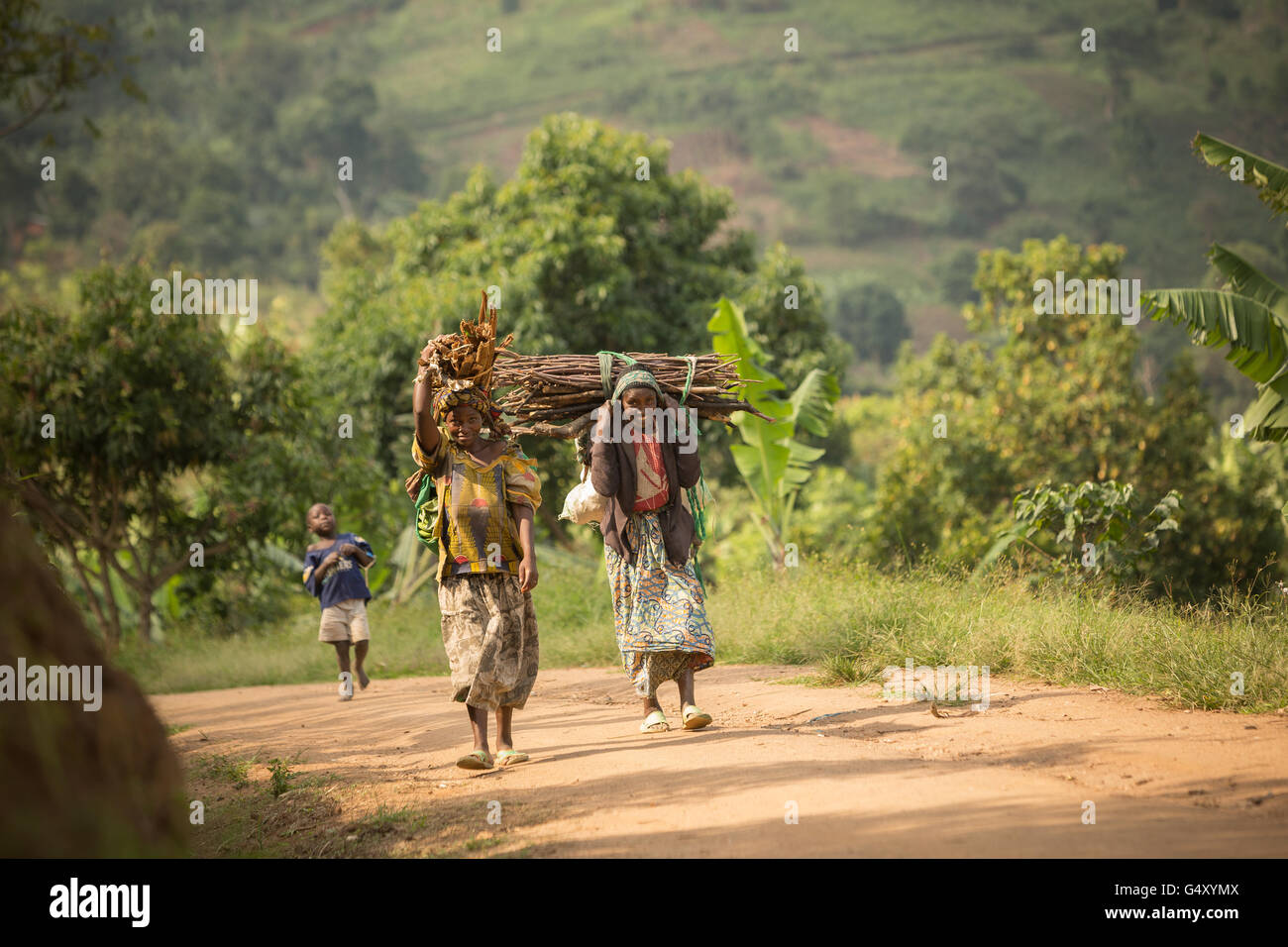 Women carry firewood down a rural village lane in the foothills of the Rwenzori Mountains on the DRC / Uganda border. - Stock Image