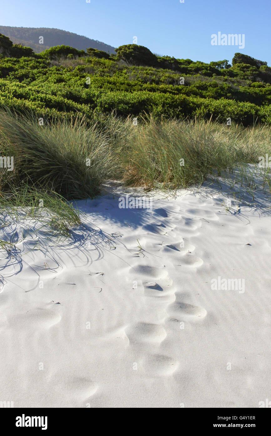 Denison Beach Stock Photos & Denison Beach Stock Images - Alamy