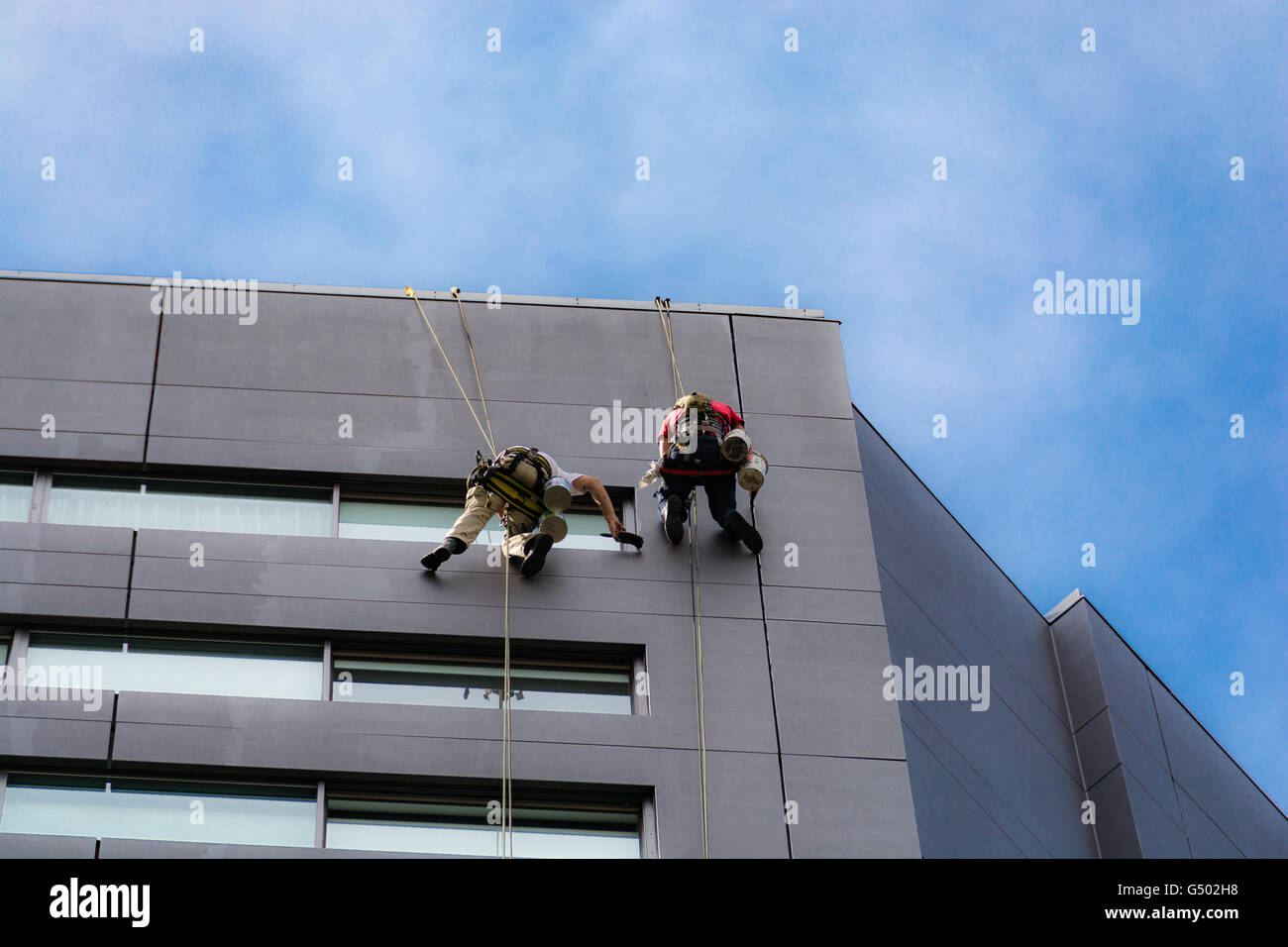 New Zealand, Auckland, Secured facade workers dangle at high-rise building, painting work on a facade - Stock Image