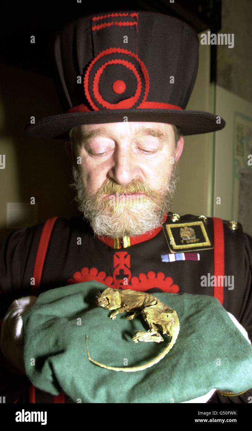 Tower of London rat Domesday - Stock Image