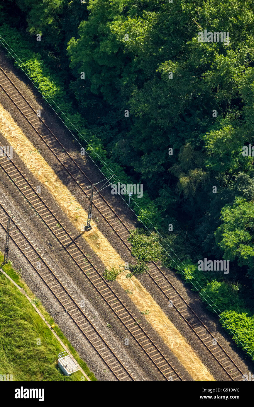 Aerial view, trees on the railway line parallel to the A3 southbound, storm damage from the June 9, 2014 and the - Stock Image