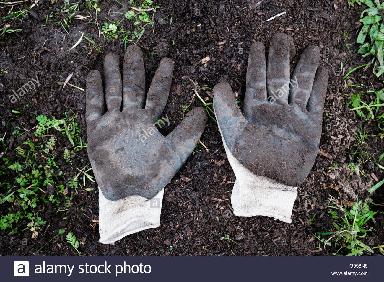 Pair of Muddy Gardening Gloves at Richmond Trees Planting Event, Richmond, California - Stock Image