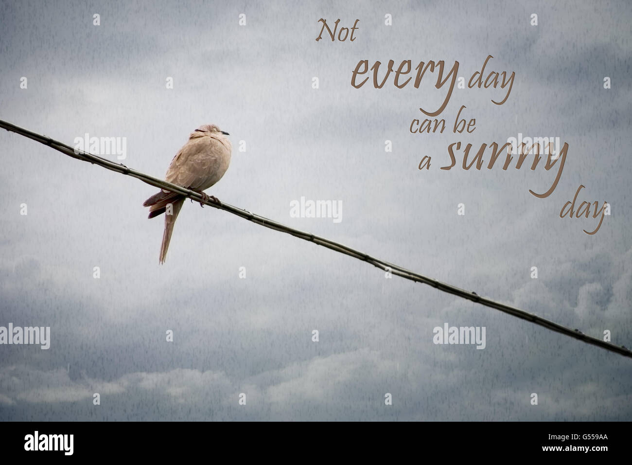 Truism. Wet bird on telephone wire. Bad weather life concept. - Stock Image