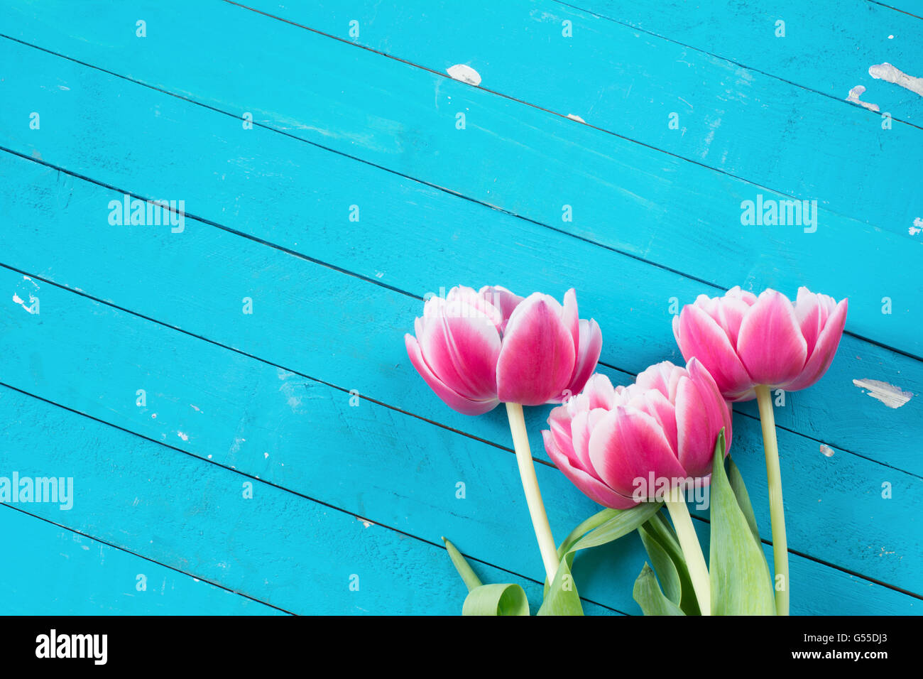 Floral background three pink flowers on bright blue vintage wooden floral background three pink flowers on bright blue vintage wooden background with copy space for text mightylinksfo
