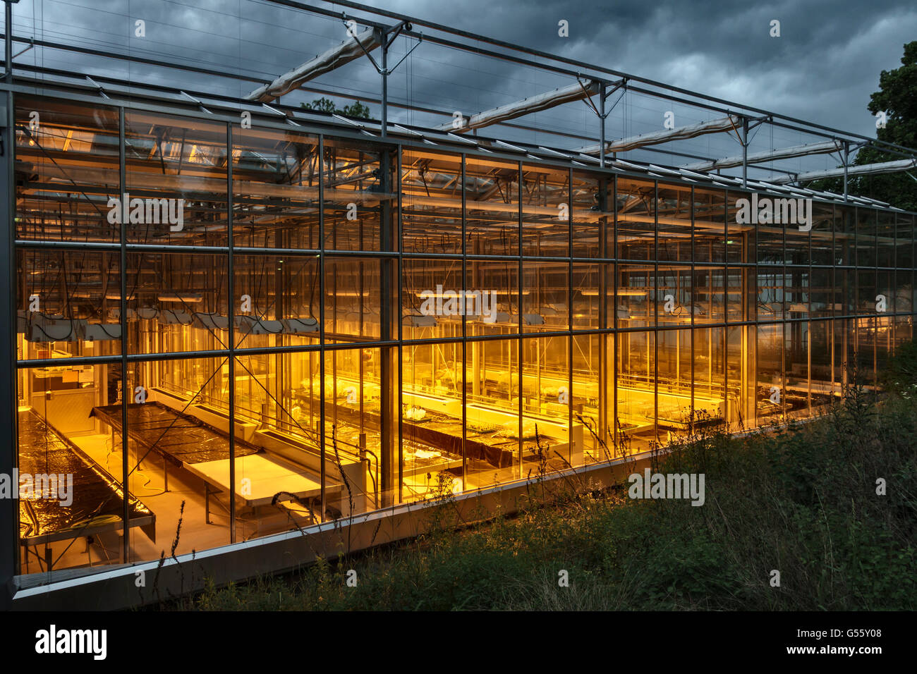 Dahlem, Berlin, Germany. Growing lights in greenhouses belonging to the Biology Department of the Freie Universität - Stock Image