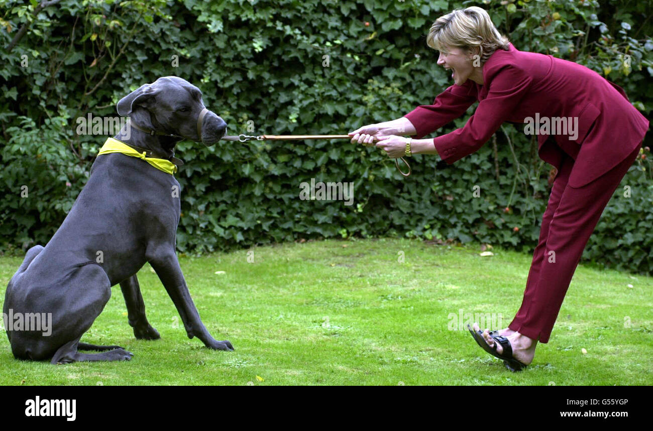 Top Dog Awards Anthea Turner - Stock Image
