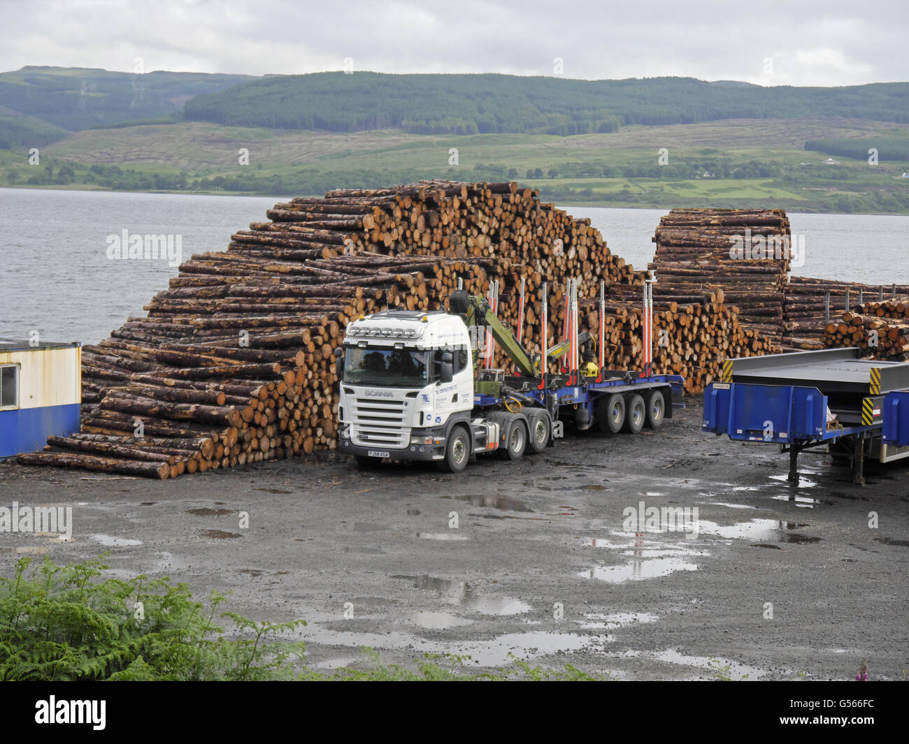 Pile of softwood timber and lorry at port, Isle of Mull, Inner Hebrides, Scotland, July - Stock Image