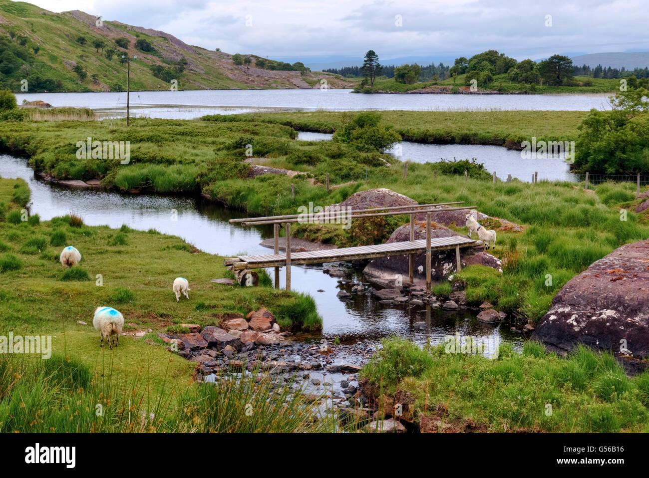 Gleninchaquin Park, Cloonee Lough, Beara Peninsula, County Kerry, Ireland - Stock Image