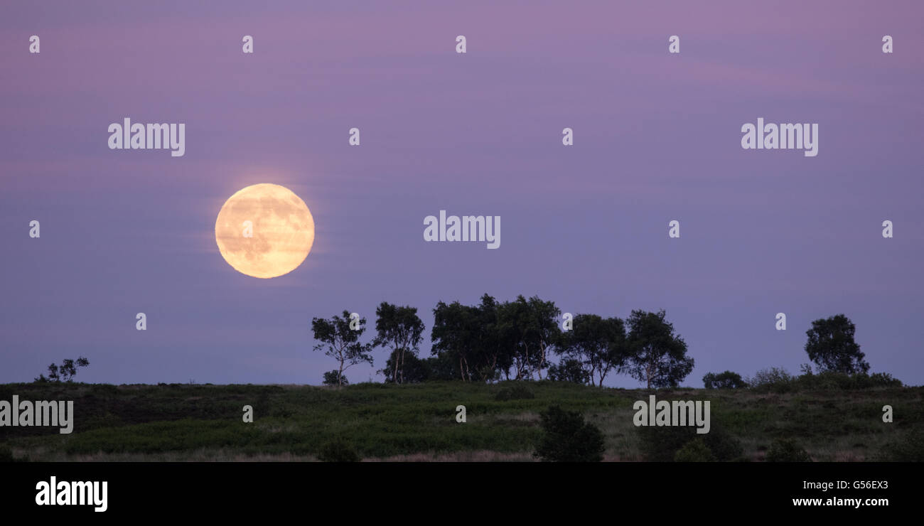 Leash Fen, Derbyshire, UK. 20th June 2016, UK. On the Summer Solstice a 'Strawberry' Moon rises over Leash - Stock Image