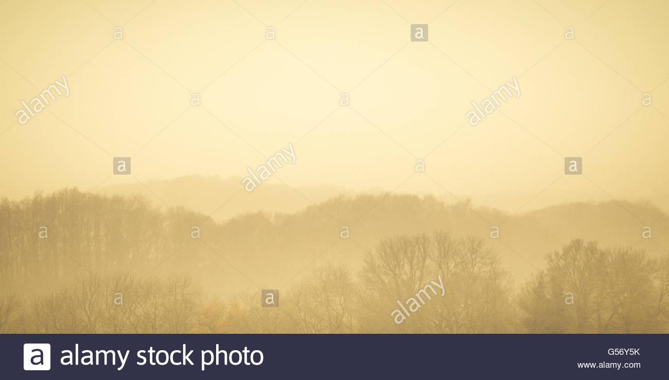 Winter woodland receding towards a misty horizon. - Stock Image