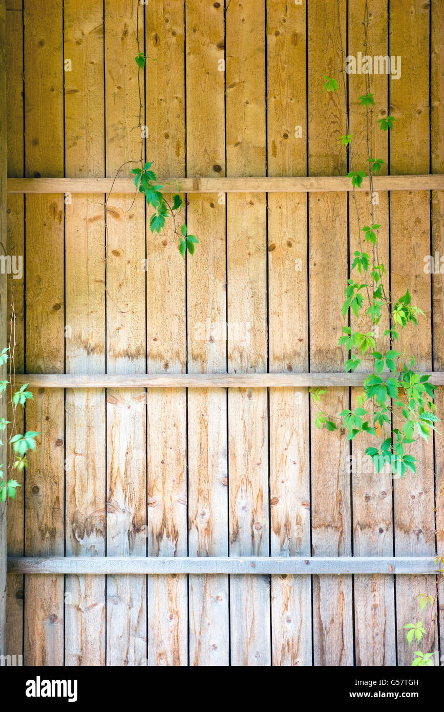 Creeper Fence Stock Photos & Creeper Fence Stock Images - Page 2 - Alamy