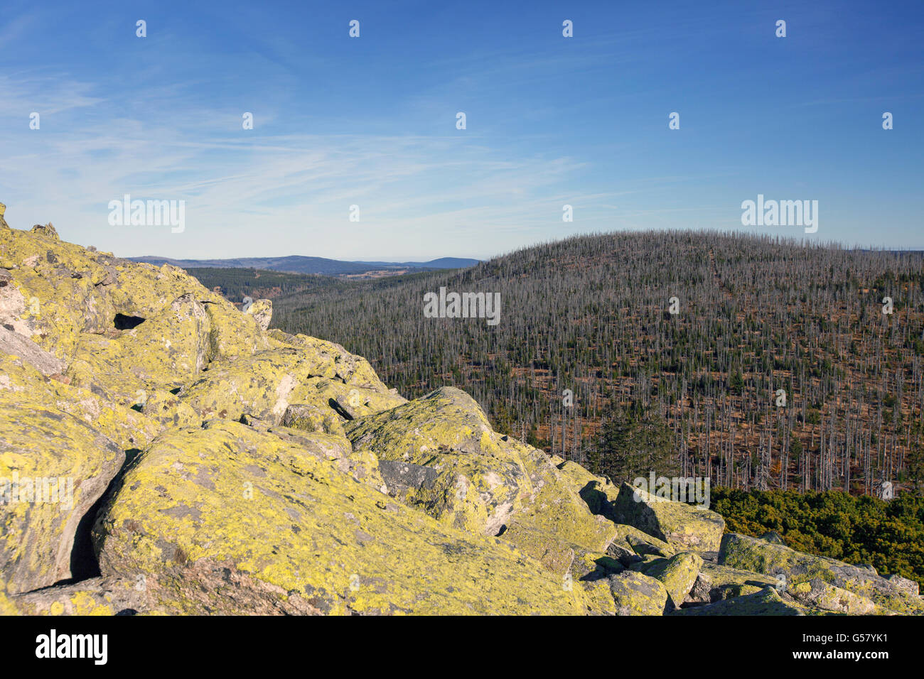 View from Mt Lusen over woodland with dead trees killed by bark beetles in the Bavarian Forest National Park, Bavaria, - Stock Image