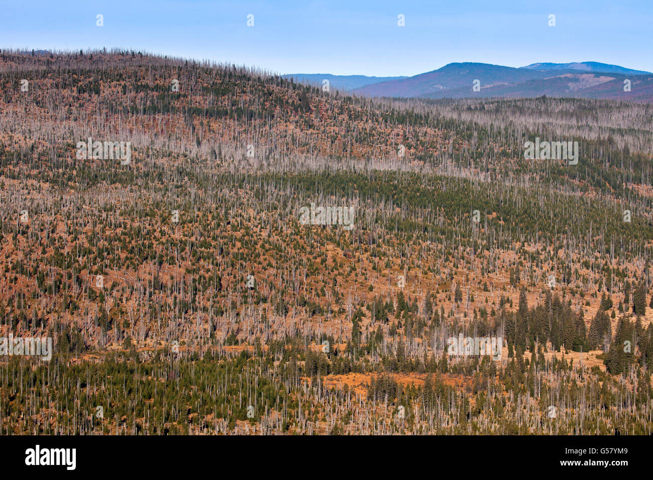 View from Mount Lusen over woodland with dead trees in the Bavarian Forest National Park, Bavaria, Germany - Stock Image