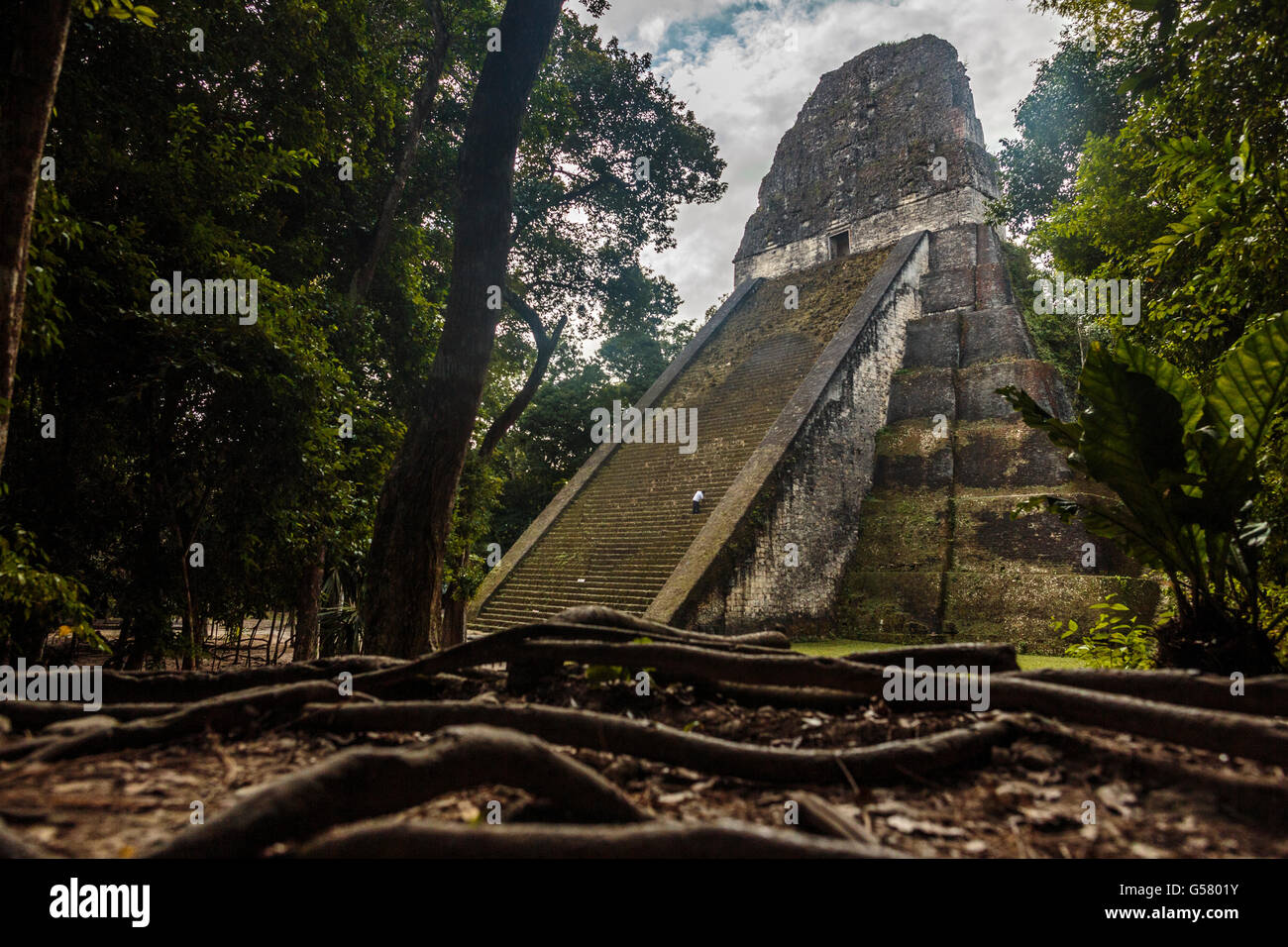 A man cleans the steps of the Temple 5 in the lost world of Guatemala's Mayan Ruins in the jungle of Tikal National - Stock Image