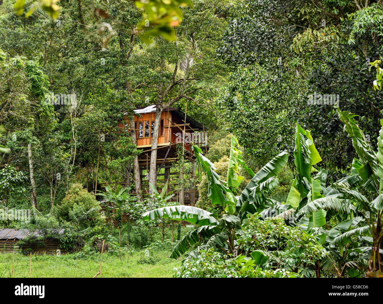 Tree house in the jungle. Tomohon. North Sulawesi. Indonesia - Stock Image