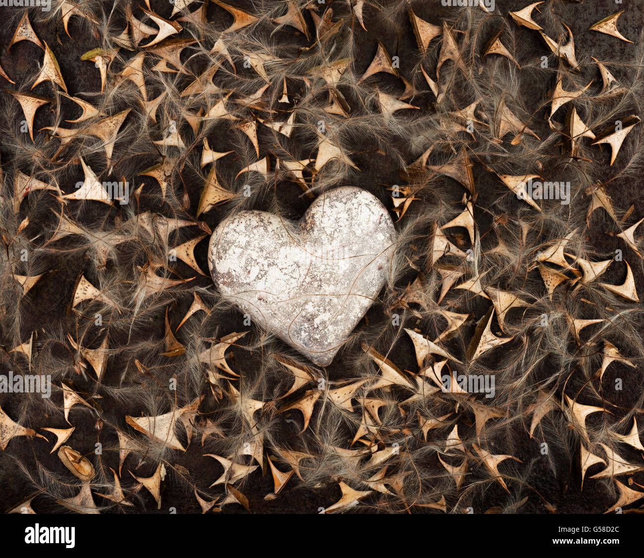 Antique silver effect heart surrounded by rose thorns and clematis seeds, on a brown rusty background - Stock Image