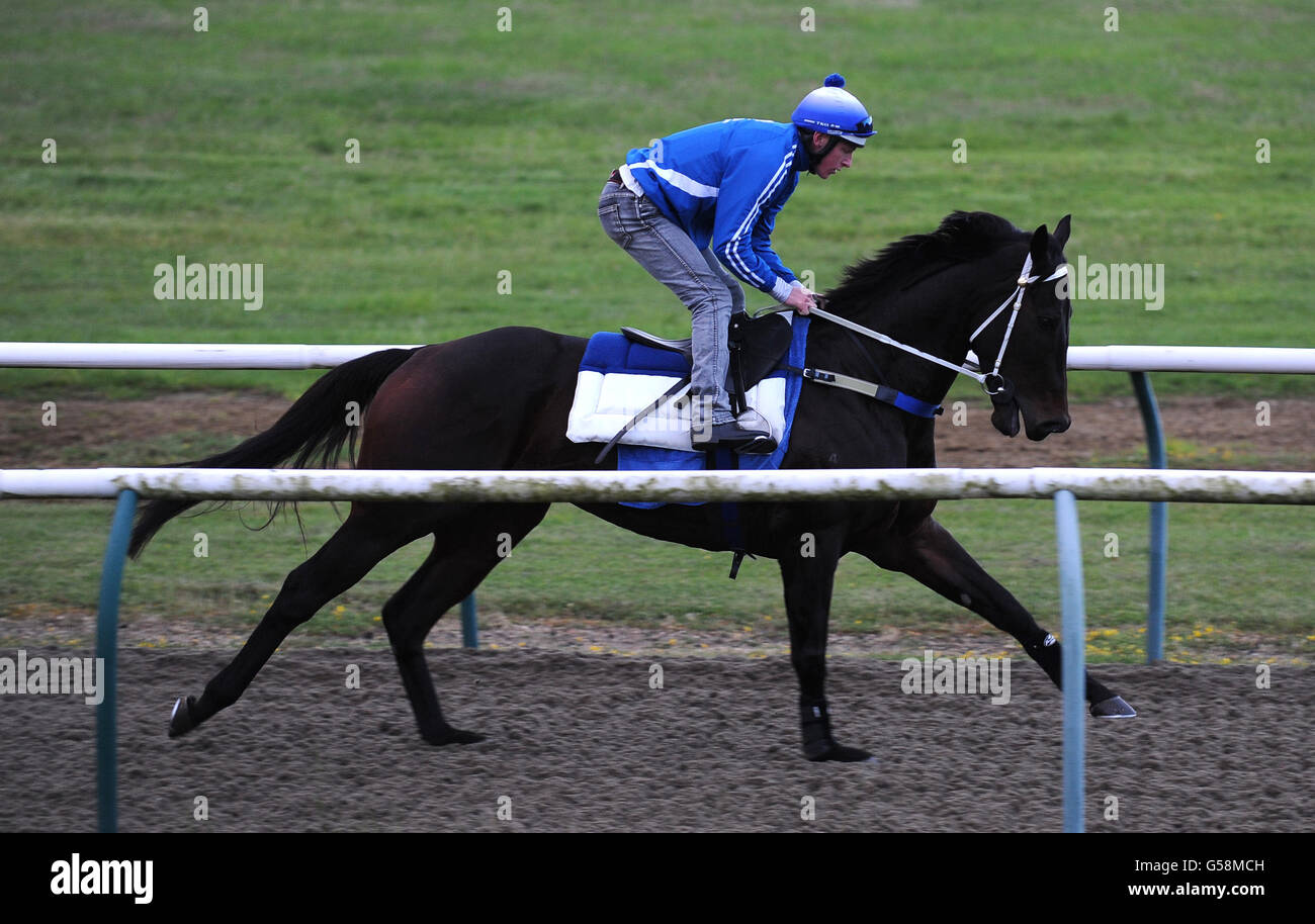 Horse Racing - Official Ascot Media Morning - Newmaket Racecourse Training Grounds - Stock Image