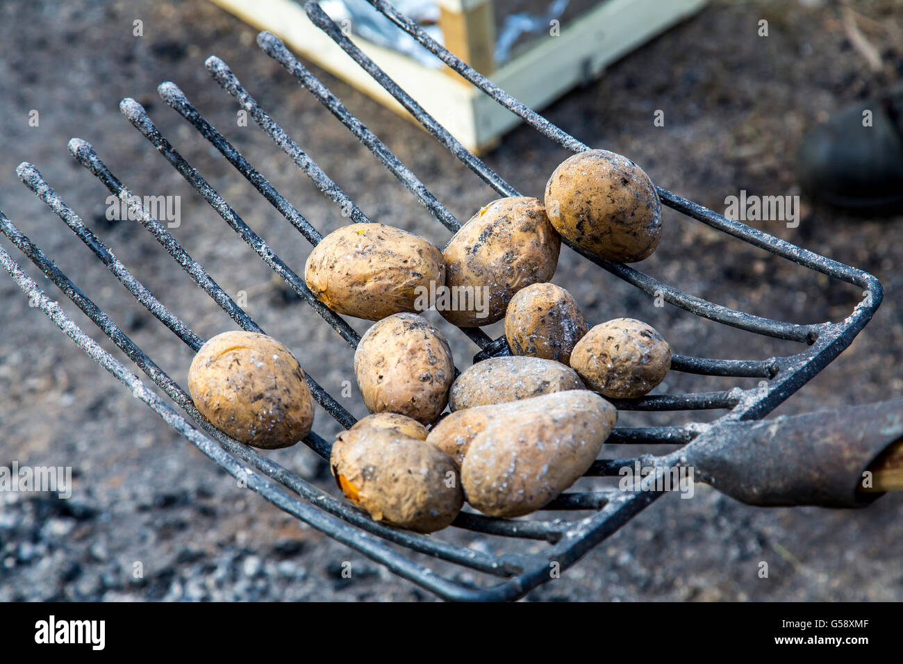 Potatoes, baked in the embers of a campfire, food, burning ash, glow, - Stock Image