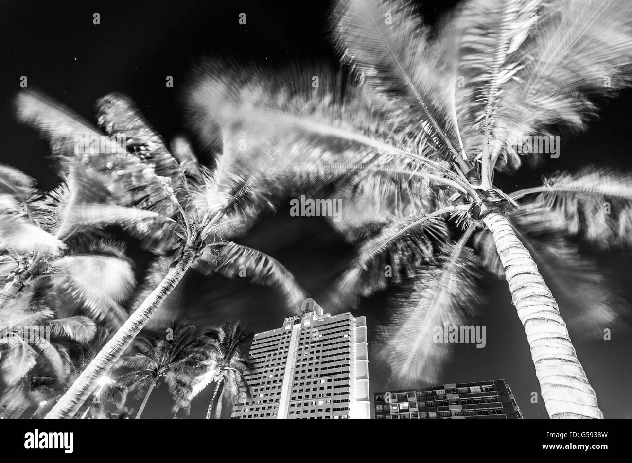 Palm trees blowing in the wind at Durban Garden Court hotel Stock Photo