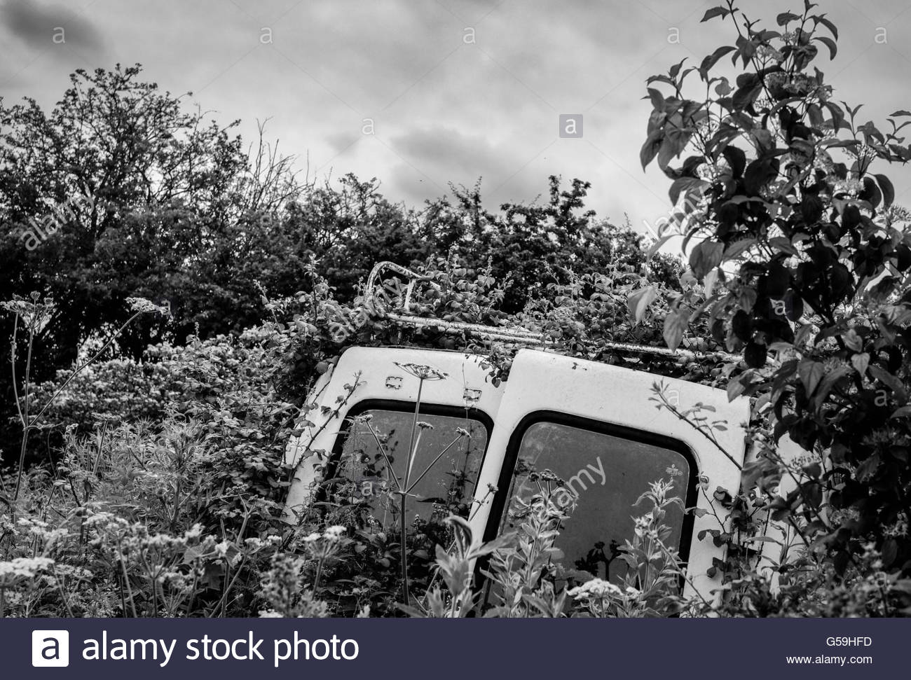 Old, abandoned van seen left at the side of a field in a rural location with foliage growing over it. - Stock Image