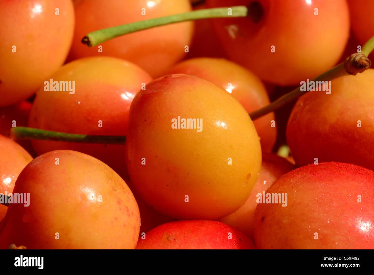Cherries pile close up - Stock Image